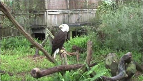 Tampa's Lowry Park Zoo | Paycor Client Testimonial