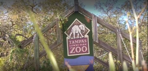 The Lowry Park Zoo Testimonial