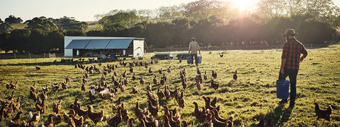 Case Study: Gerber Poultry