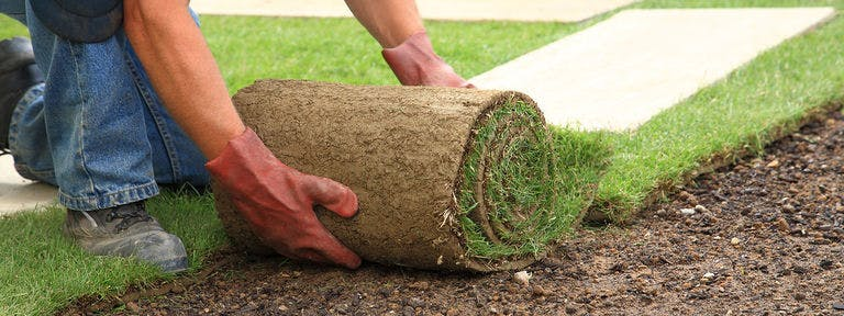 Case Study: Buy Sod