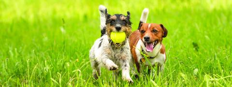 Case Study: Red Bluff Pet Resort