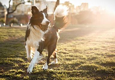 dogs runniing